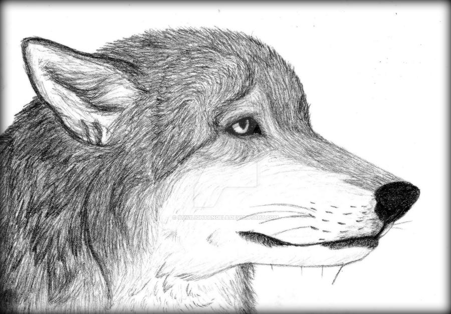 Sad Wolf Portrait By 8TwilightAngel8 ...