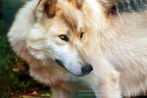 Watcher of the Wood by 8TwilightAngel8