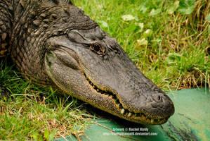 Prowling Gator by 8TwilightAngel8