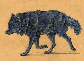 Black Wolf by 8TwilightAngel8