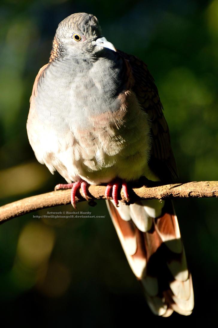 Dove at Dawn by 8TwilightAngel8