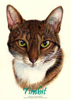 Pet Portrait - Timbit by 8TwilightAngel8