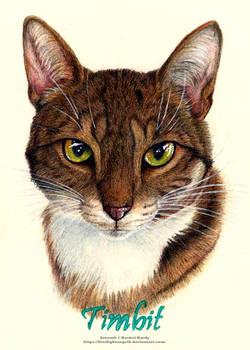 Pet Portrait - Timbit