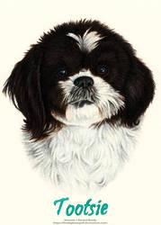 Pet Portrait - Tootsie