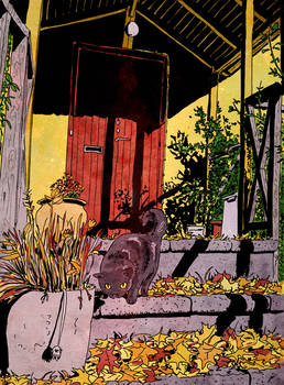 Cat in the porch