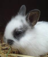 Baby Rabbit by Zirconia