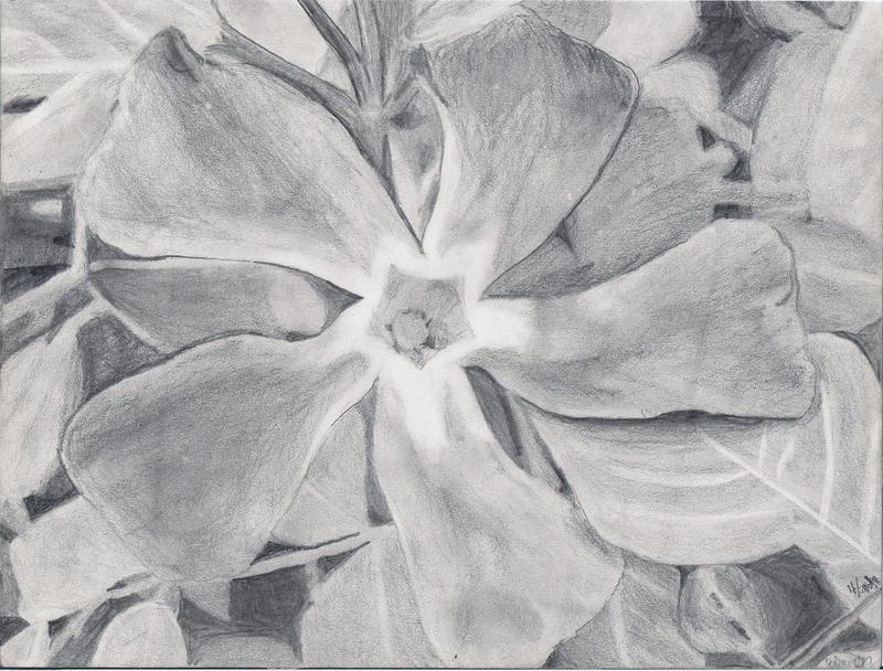 Flower by warriorofthewind