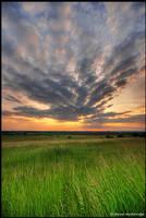 heading for sun by Dave-Derbis