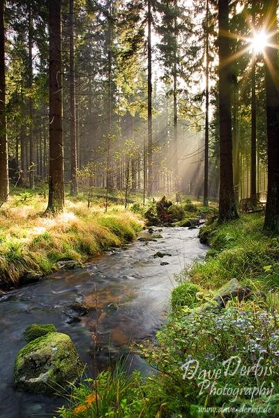 Illumination Forest by Dave-Derbis