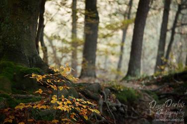 Forest Life by Dave-Derbis