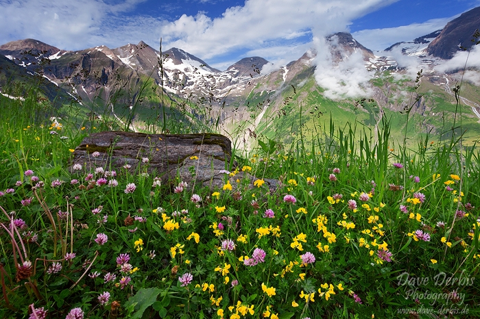 Wildflower Mountains by Dave-Derbis