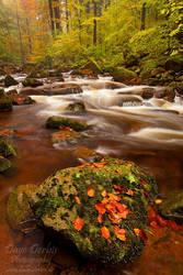 Autumn Cascade by Dave-Derbis