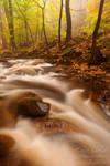 Mystic Autumn Trail