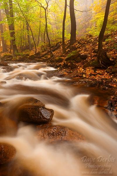 Mystic Autumn Trail by Dave-Derbis