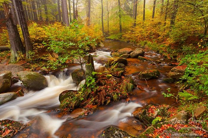 Autumns Beauty by Dave-Derbis