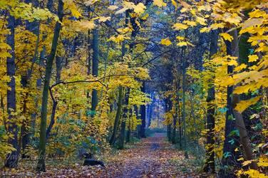 Autumn Walk by Dave-Derbis