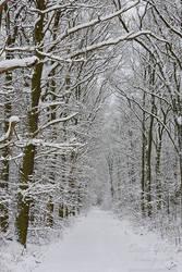 Winter Walk by Dave-Derbis