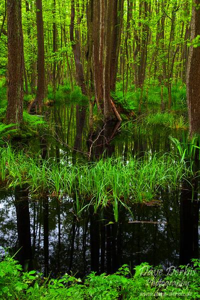 Regenwald Darss by Dave-Derbis