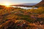 Vatnfjorden Sunset