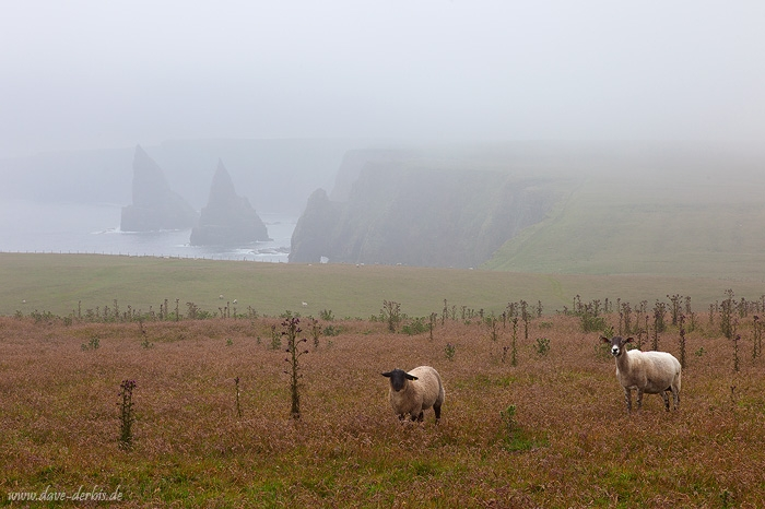 Duncansby Head by Dave-Derbis