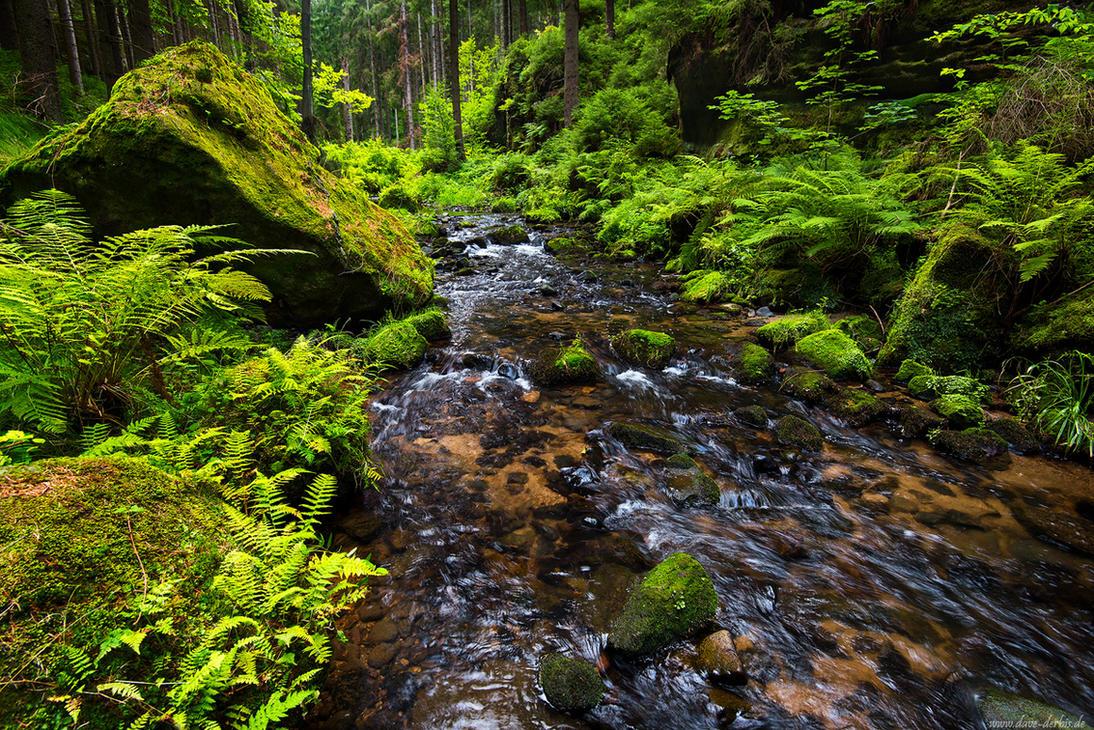 Bohemian Jungle by Dave-Derbis
