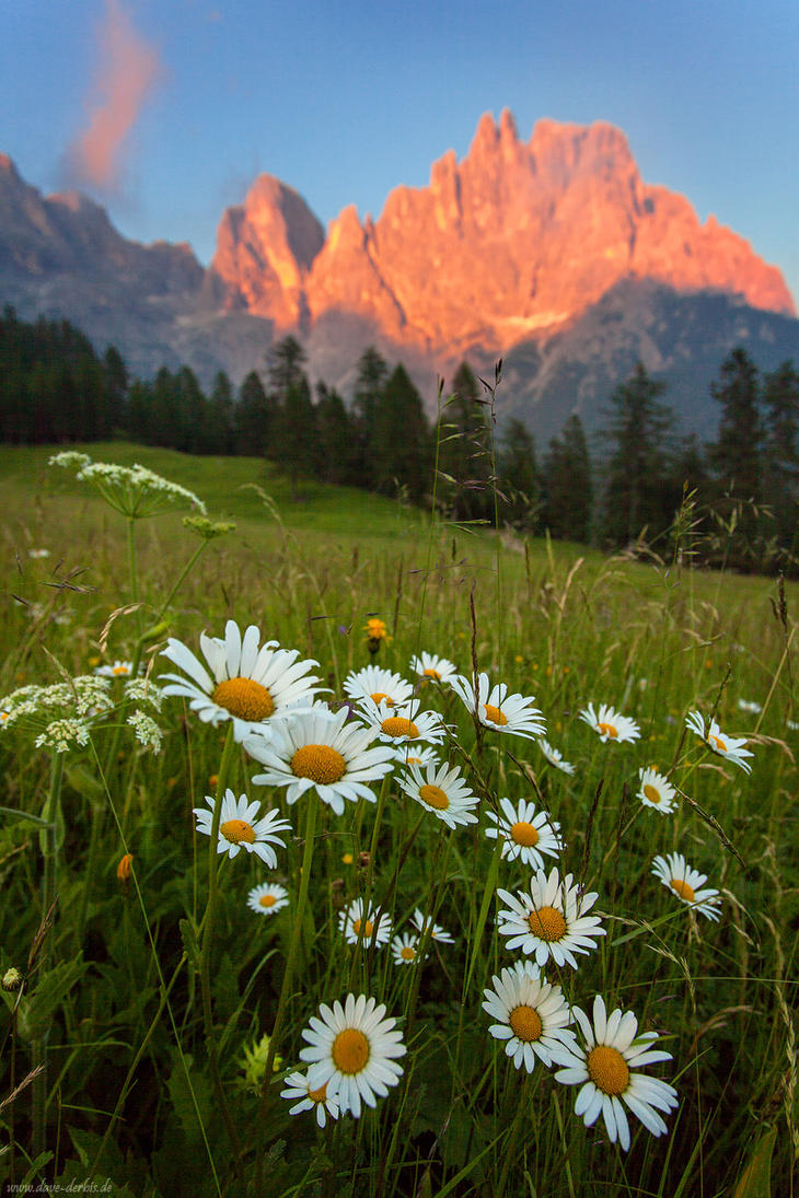 Wildflower Alpenglow by Dave-Derbis