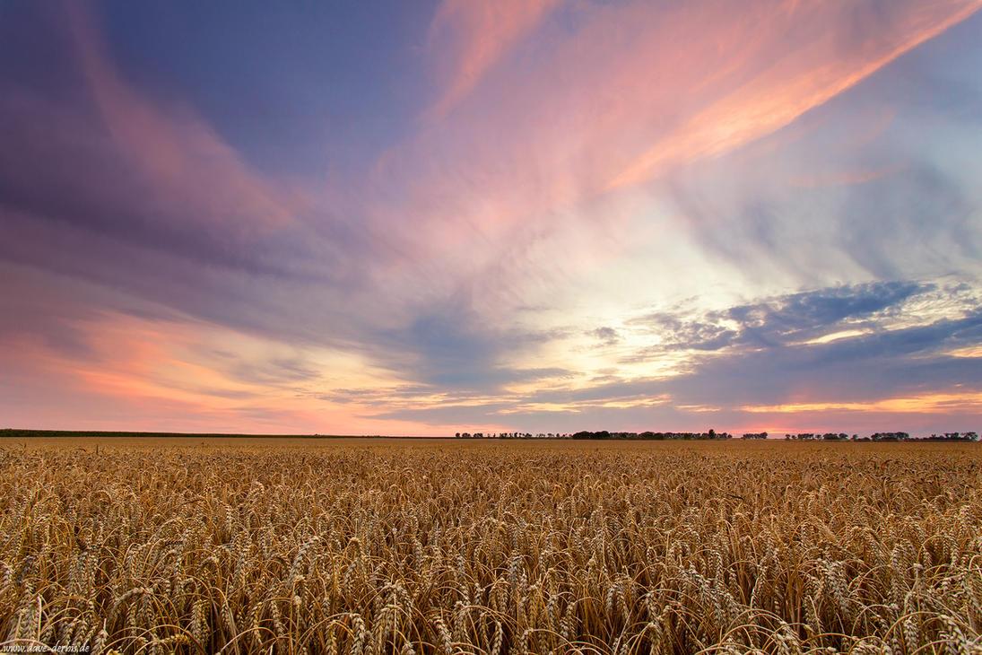 Rural Sunset by Dave-Derbis