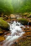 Summer Forest Falls