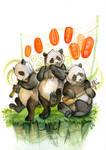 Stage Pandas