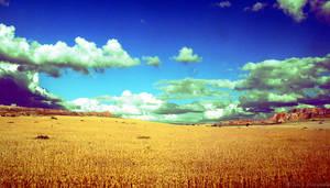 golden field by TheGrinder78