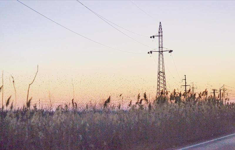 sunset2 by laeksa-red