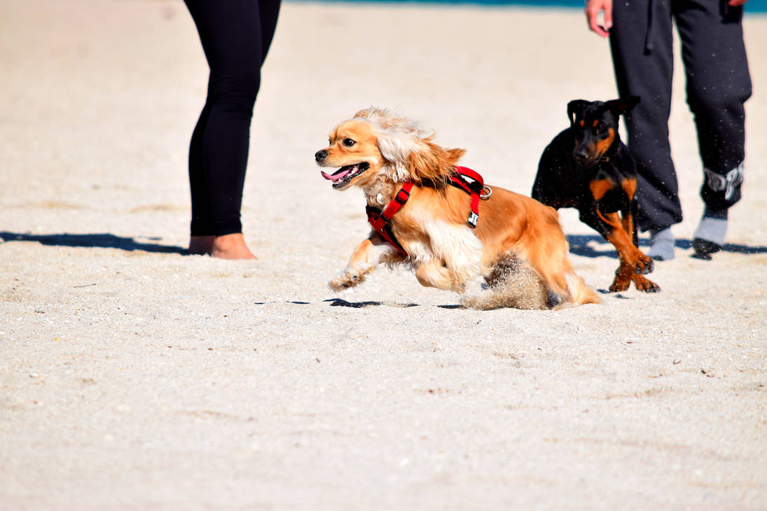 Dogs chasing each other by Caine-of-Nod