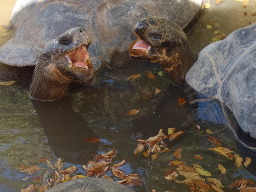 Tortoise Argument by UnderTallTrees