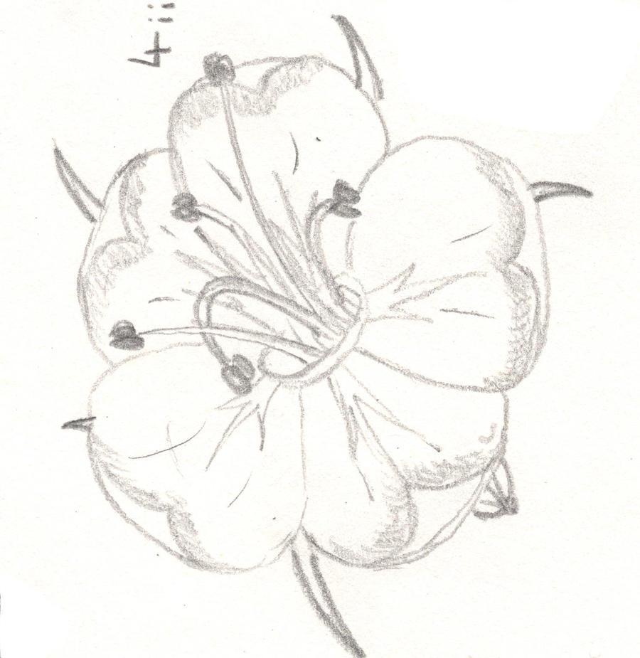 Hawthorn Flower Tattoo Hawthorn Flower 4 by Kendergem