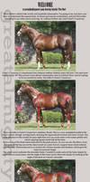 Ponies Tutorial - Part 1