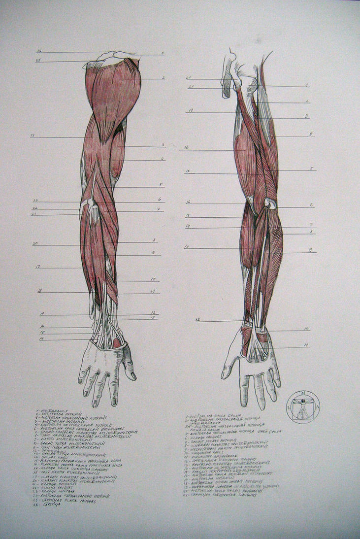 Browse Human Anatomy Resources Stock Images Deviantart