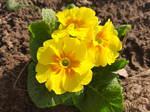 Gardentreasure2