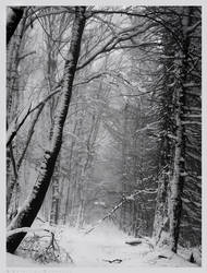 Snow Covered Darkness