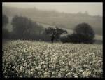 Crows Field by Spiritofdarkness