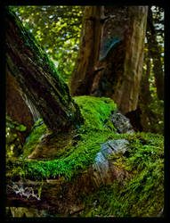 Slumbery Trails by Spiritofdarkness