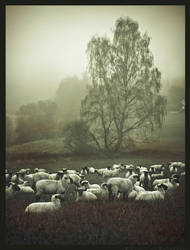 Fog Sheep I by Spiritofdarkness