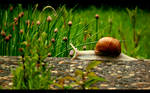 Snail Road by Spiritofdarkness
