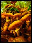 Fungi Hill