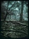 Carabosse Forest II by Spiritofdarkness