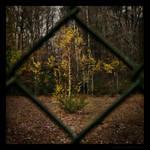Tree Sports Ground by Spiritofdarkness