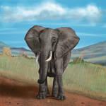 Affrican Elephant
