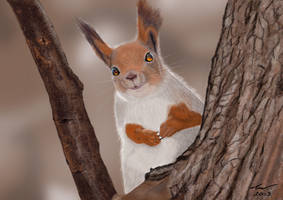 Red Squirrel by niveky