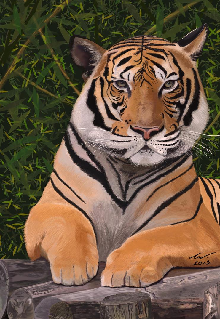malayan tiger drawing - photo #3