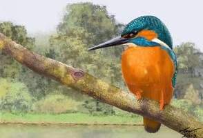 Kingfisher by niveky