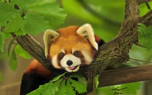 Red Panda by niveky